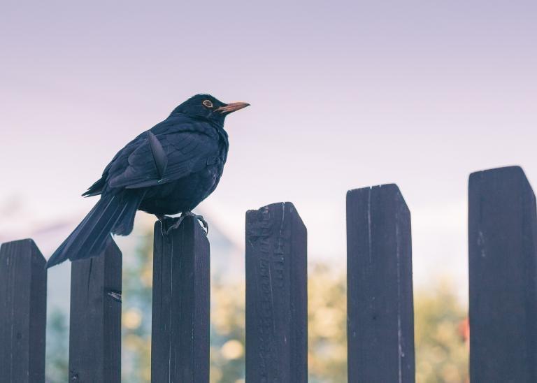 Ptak na płocie